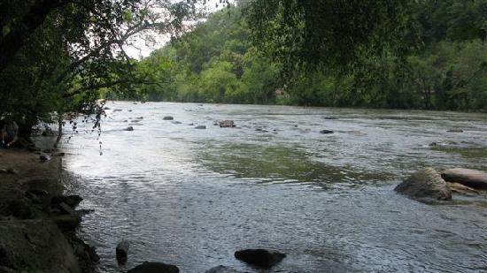 French Broad River Campground: View from campsite