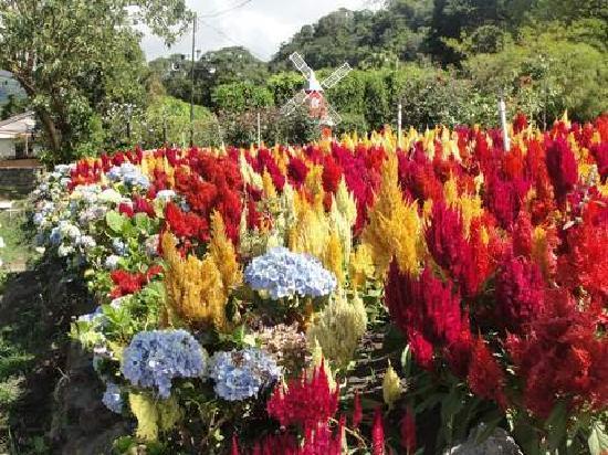 Hotel Ladera: Beutiful Gardens