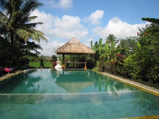 Gayatri Bungalows: pool - overlooking rice field