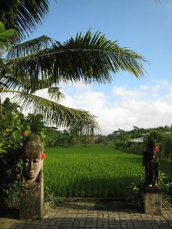 Gayatri Bungalows: view of rice fields from pool