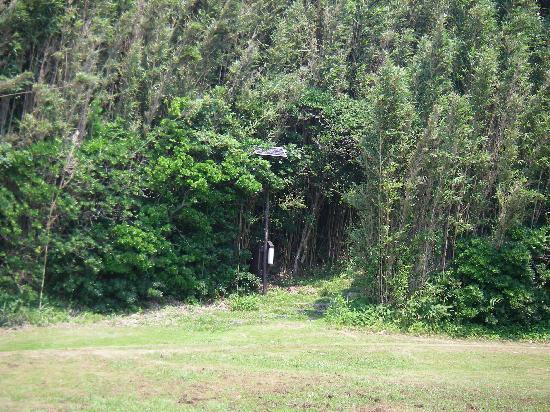 โรงแรม โตมิอูระ รอยัล มินามิโบโสะ: the little woody-area where we came out from onto the beach area