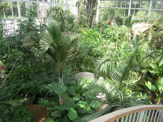 The Kochi Prefectural Makino Botanical Garden: 数年後が楽しみな空中回廊