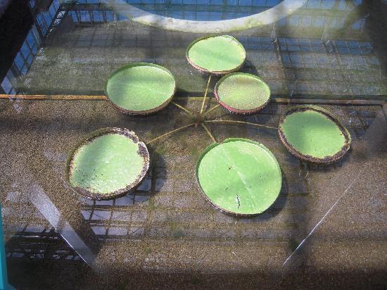 The Kochi Prefectural Makino Botanical Garden: 園内のあちこちにも水辺の植物はありました。