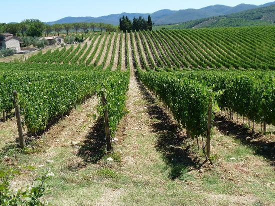 Hotel Residence SanSano : une vue de la vigne Toscane