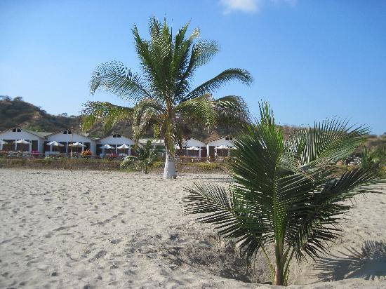Zorritos, Peru: Vista de bungalows y palmeras con cocos