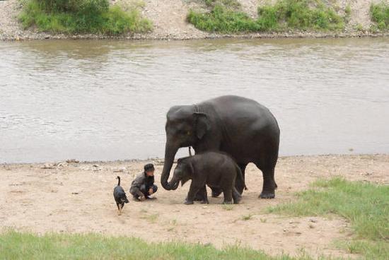 เมืองเชียงใหม่, ไทย: tiny elephant