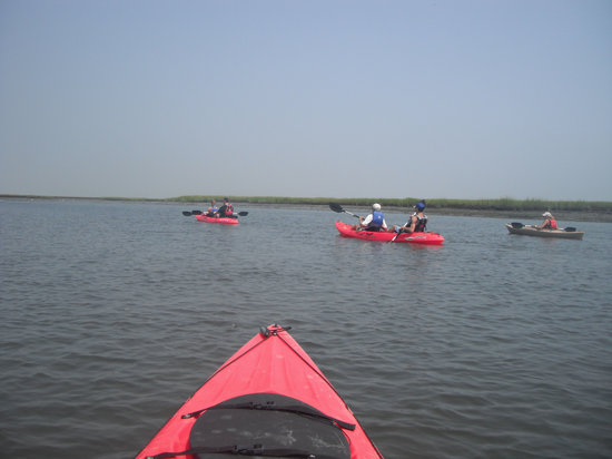 Cape Kayaks: Group in the Marsh