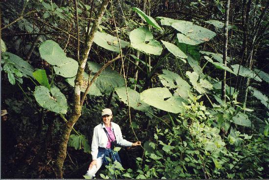 El Refugio de Intag Lodge: Trish in the Cloud Forest