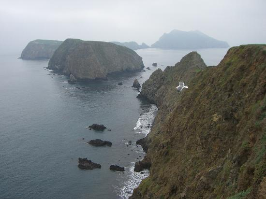 Channel Island Shores : View from Inspiration Point, Anacapa Island