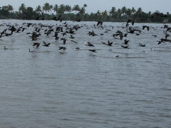 Eco Trails Kerala: Thousands of Birds