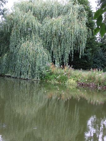 Ashwater House: Fishing by the Willow !