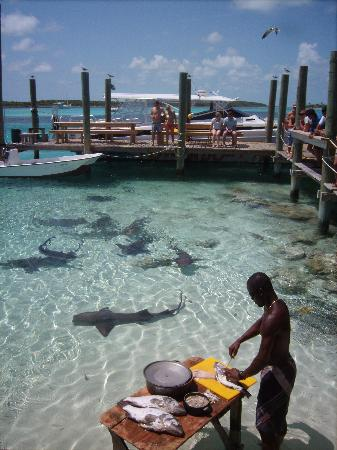 Sunrise Beach Clubs and Villas: Getting lunch ready for our finned friends, powerboat adventure