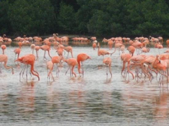 Cabanas Uh Najil Ek Balam: flamencos de rio lagartos