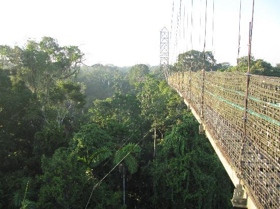 Coca, Ecuador: canopy walk