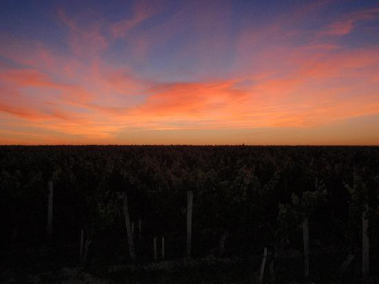 Demeure des Girondins: Sunset over the vineyards.