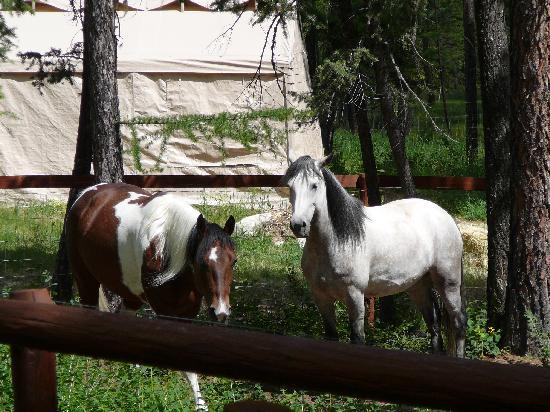 The Master Suite Bed and Breakfast: owners horses on property