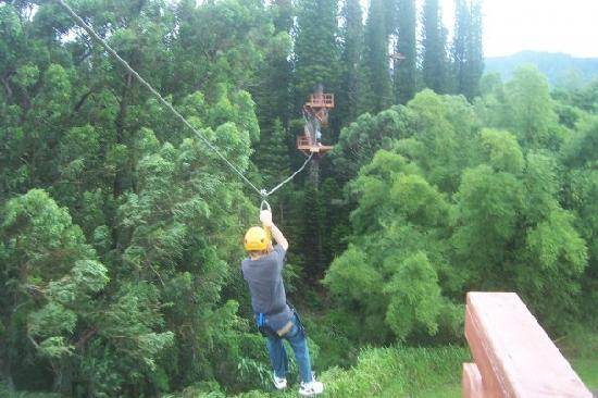 Just Live! Zipline Tours : Zipping thru the trees