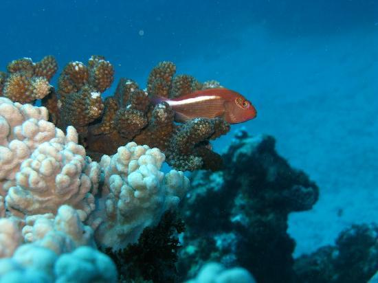 Blues Diving Centre : underwater scene