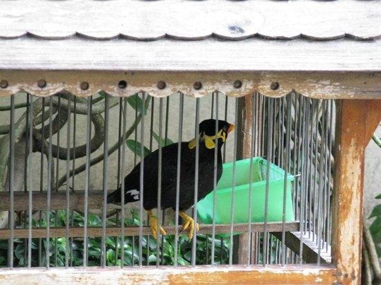 Patumwan House: Der BEO !!