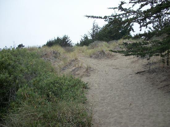 Bodega Dunes Campground: site 88c