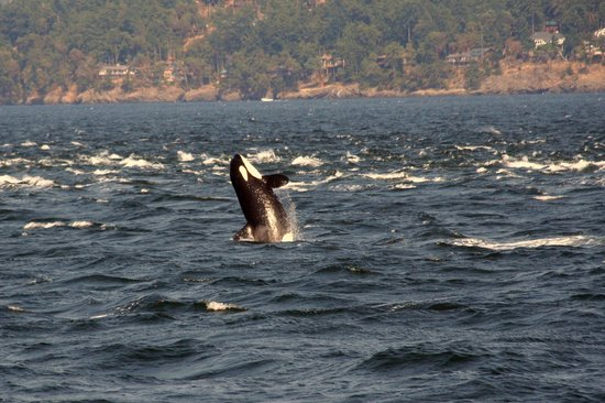 Five Star Whale Watching: Just beautiful