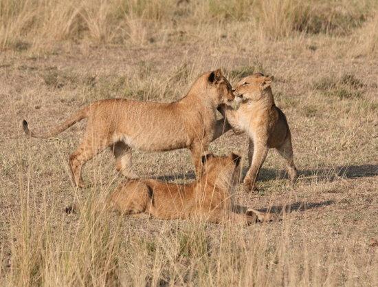 Serian Safari