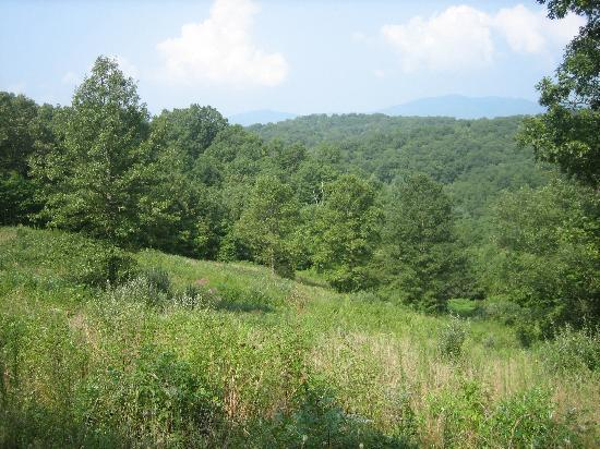 Blanche Manor Horseback Riding : View from the top