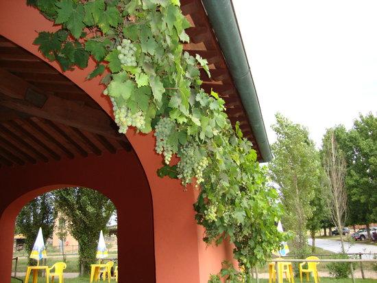 Casale La Sterpaia: l'uva della sterpaia