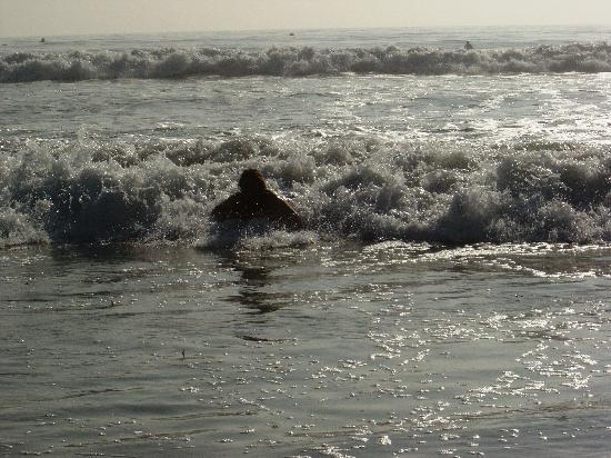 Moonlight Beach Motel: Bretter kann man am Strand leihen