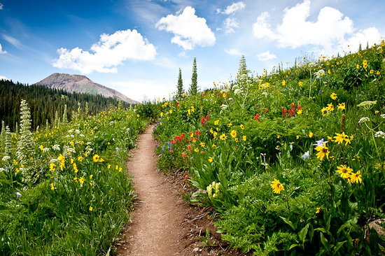 Crested Butte, CO: West Maroon Pass - wildflowers