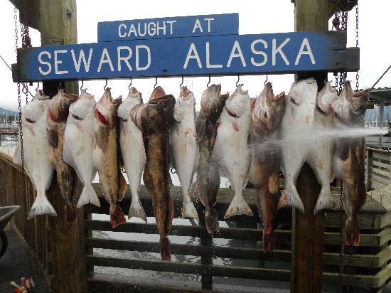 Alaska Creekside Cabins: Halibut and ling cod