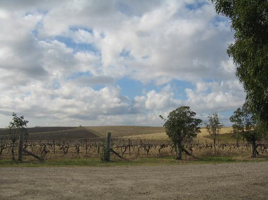 Gabriel's Paddocks Vineyard: Views all around