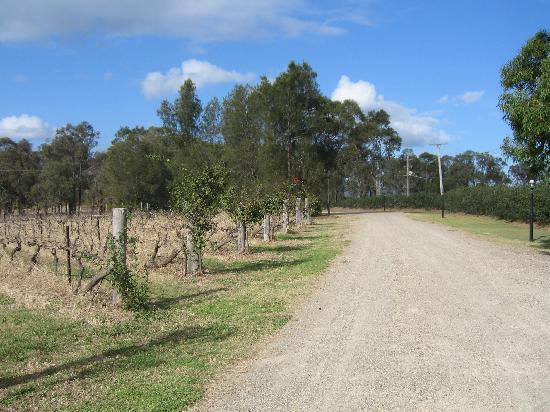 Gabriel's Paddocks Vineyard: Welcome