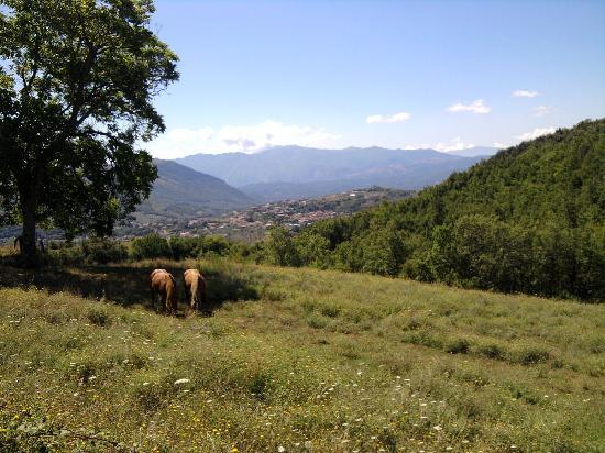 Italy Farm Stay: One of the views shortly before the most challenging part of the hike.