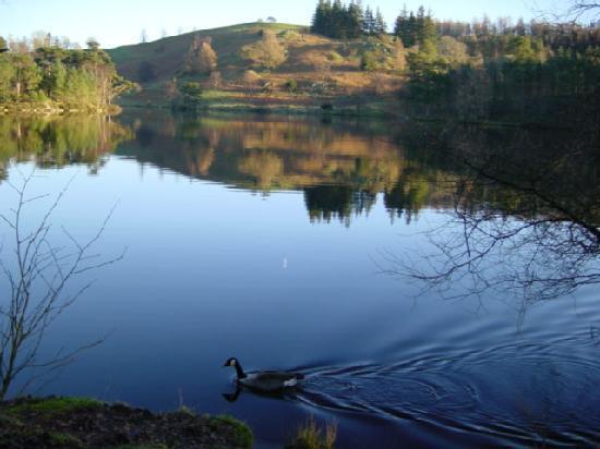 Crompton House: The Lake