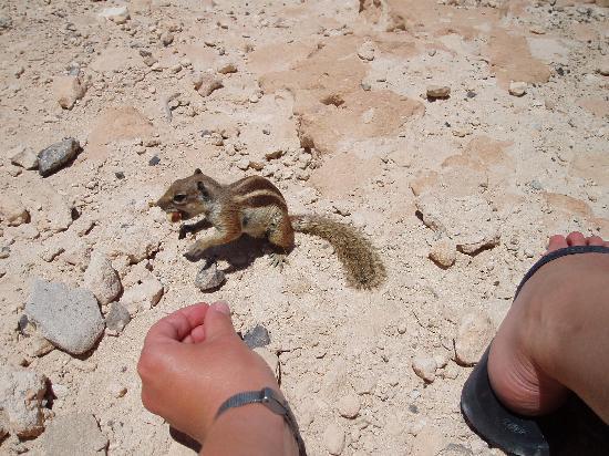 R2 Rio Calma Hotel & Spa & Conference : les écureuils pas farouches