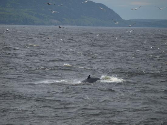 Auberge Fleurs de Lune: croisière aux baleines