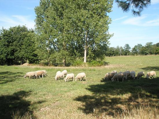 Residence Le Clouzy: le clouzy champs