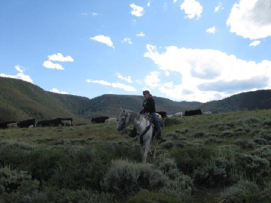 Vee Bar Guest Ranch: Cattle Drive/Deerwood