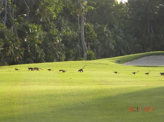 Moon Palace Golf & Spa Resort: These ran out in front of us on our first hole