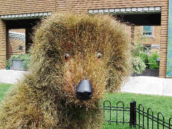 Montreal, Canadá: Dog Made of Plants at bot gardens!