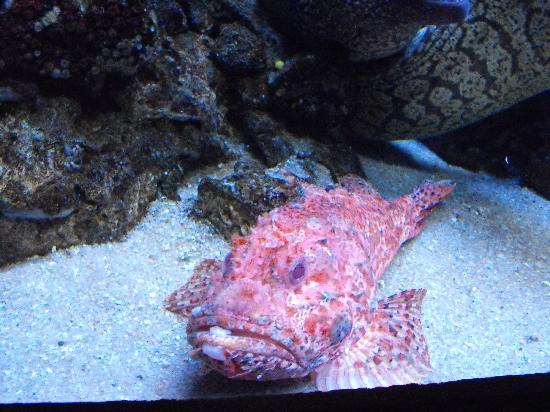 Another weird fish picture of palma aquarium palma de for Weird freshwater fish
