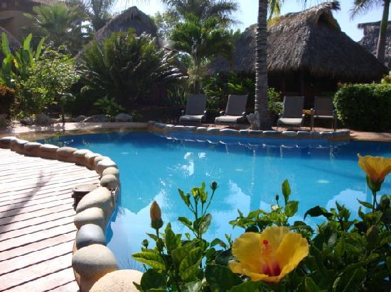 Present Moment Retreat: The beautiful pool surrounded by lush vegetation
