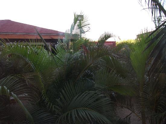 Clarion Hotel & Suites Curacao : The View from our Window