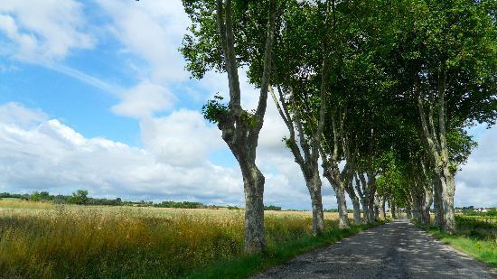 Les Remparts : A tree lined route to Uzès