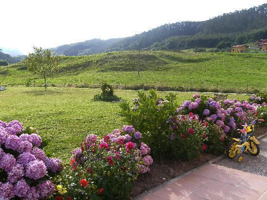 Hotel Puerta del Oriente: flores jardín