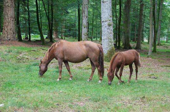 Harvest House: Ponies in the New Forest