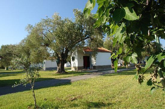 Ascea, إيطاليا: esterno bungalow