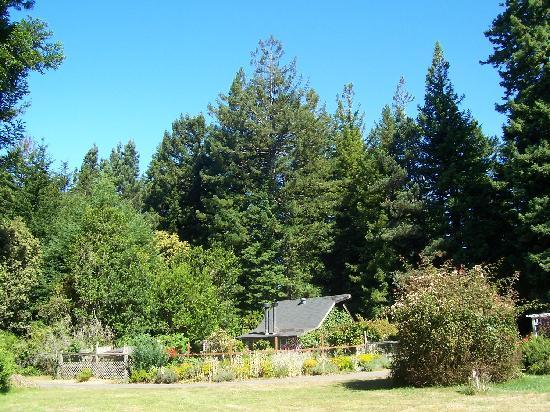 Mendocino Farmhouse: Part of the lovely gardens in a woodland setting