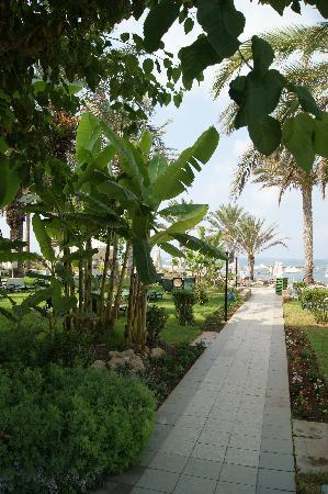 Constantinou Bros Pioneer Beach Hotel: path to the beach